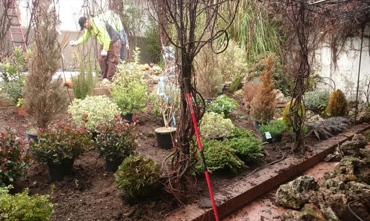 Dise o de jard n de rocalla en daganzo gardenia madrid for Diseno de jardines madrid