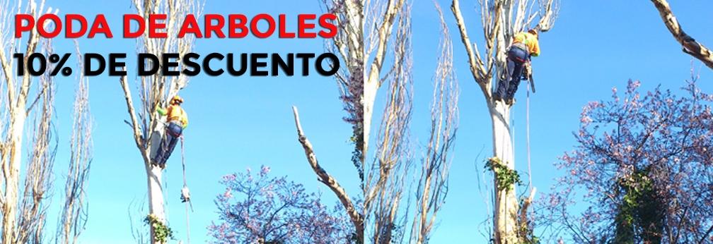 Servicios de poda en altura en madrid as como de tala en madrid gardenia madrid - Poda de arboles madrid ...