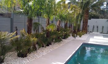 Dise o de jard n tropical en mirasierra jardiner a en for Diseno de jardines madrid