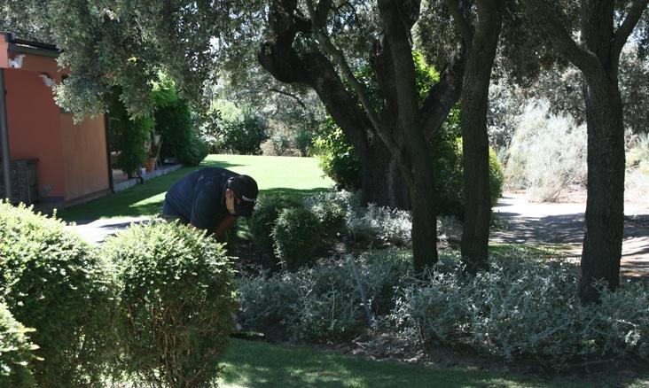 Empresa de Mantenimiento de Jardines en Madrid
