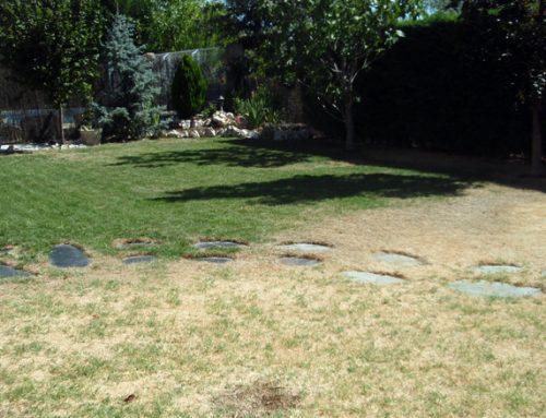Diseño de jardín ecológico en Rivas