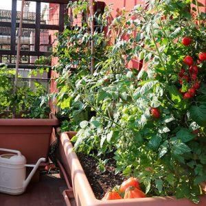 jardines urbanos y huertos