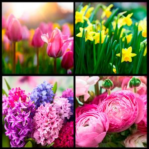 Plantación y cuidados de jardines