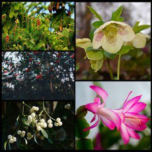 Arboles y plantas de navidad