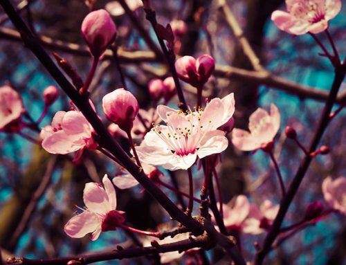 Las Flores de inicio de Primavera
