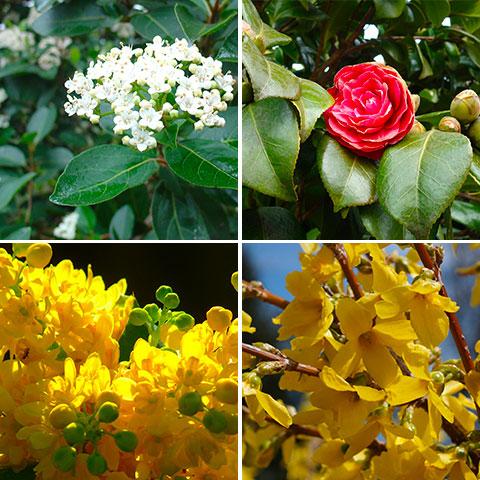Plantas con Flor en primavera