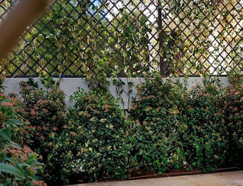 Diseño de jardín en vivienda adosada en el Viso