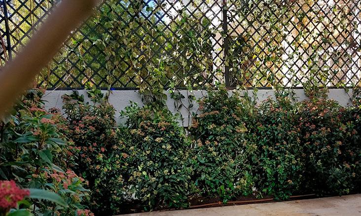 jardinería en patios y terrazas