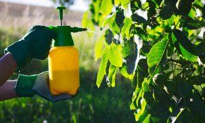 Mantenimiento de Jardines en Madrid