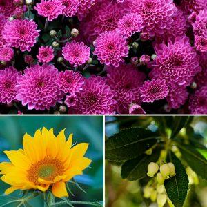 jardineria en cada estacion del año