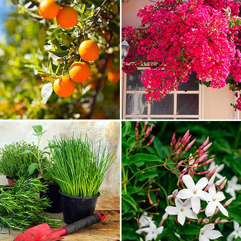 la historia de la jardineria