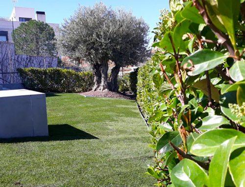 Diseño de un Jardín Unifamiliar en Aranjuez