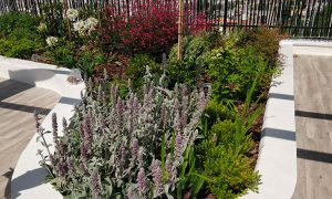 Diseño de jardines en viviendas unifamiliares