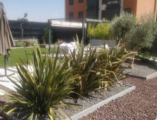 Diseño de un bajo con jardín en Vallecas