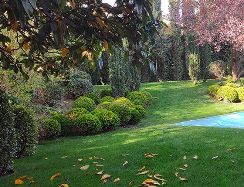 Diseño de jardín en unifamiliar en la colonia Conde Orgaz